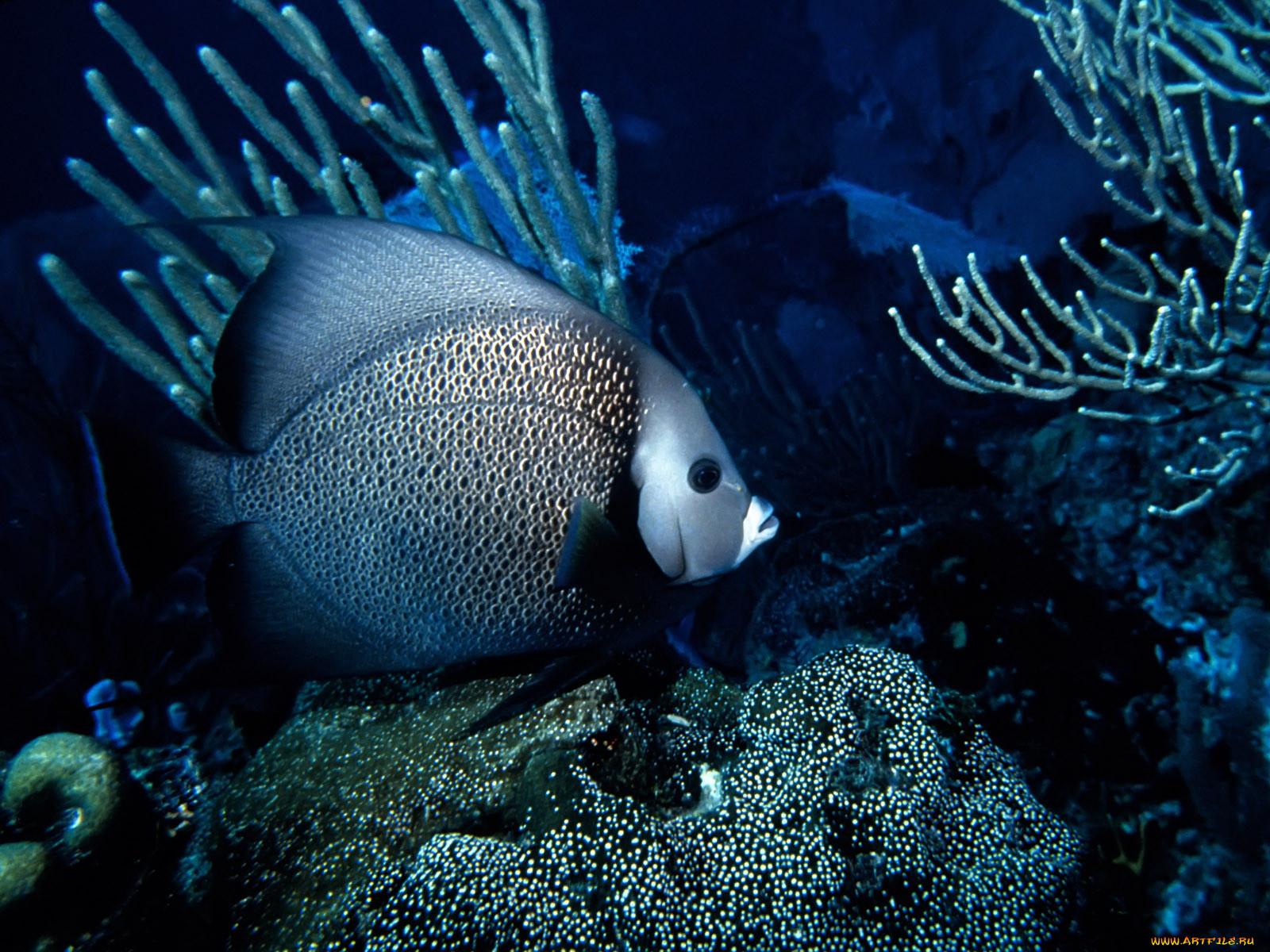 смотреть картинки рыб в море дыма